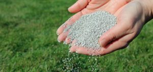 best organic lawn fertilizer