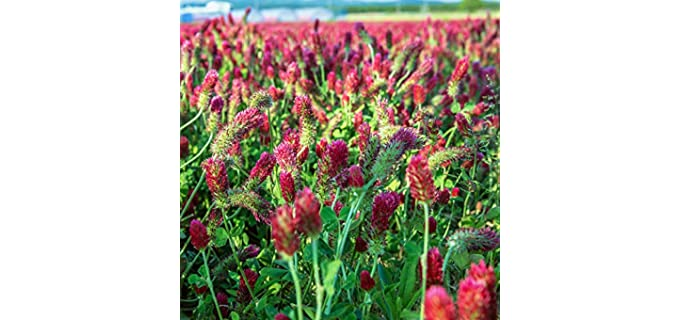 Mountain Valley Seed Company Pollinated - Organic Clover Sprouting Seeds