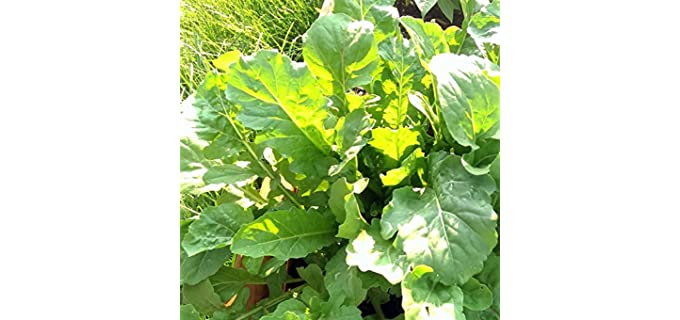 Mountain Valley Seed Slow Bolt - Arugula Garden Seeds