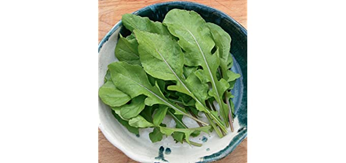 David's Garden Seeds Store SL2891 - Heirloom Arugula Seeds