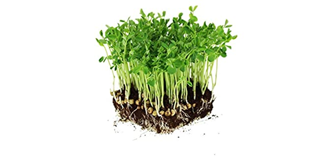 Mountain Valley Seed Sprouting - Dun Pea Seeds