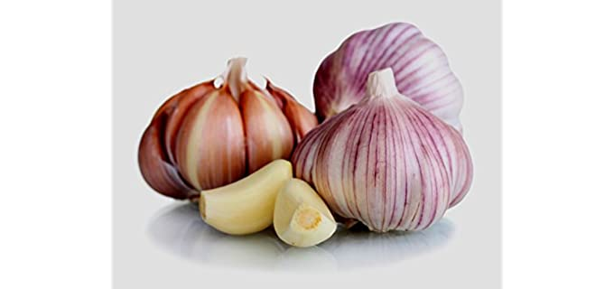 Country Creek Acres Siberian - Hardneck Garlic Bulb