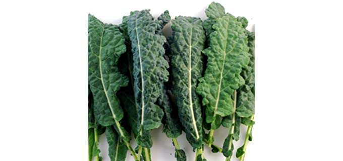PowerGrow Systems Untreated - Certified Organic Kale Seeds