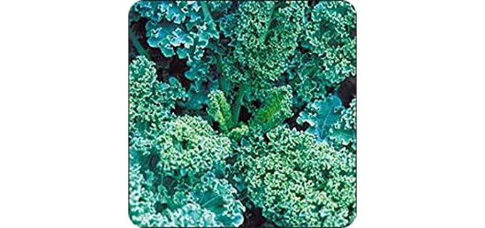 COUNTRY CREEK ACRES Blue Curled -  Scotch Kale Seeds