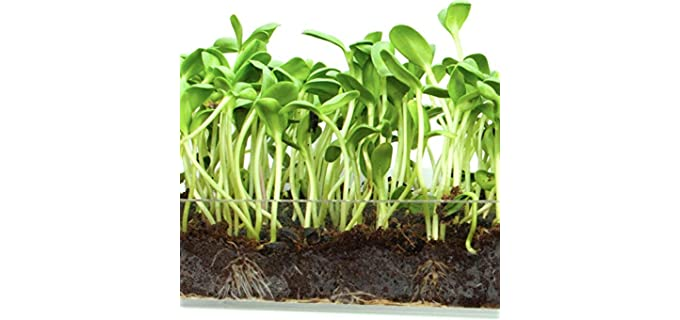 Window Garden Grow Kit - Organic Superfood Sunflower Sprouting Seeds