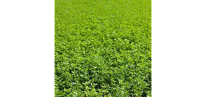 Mountain Valley Seed Conventional - Alfalfa Seeds