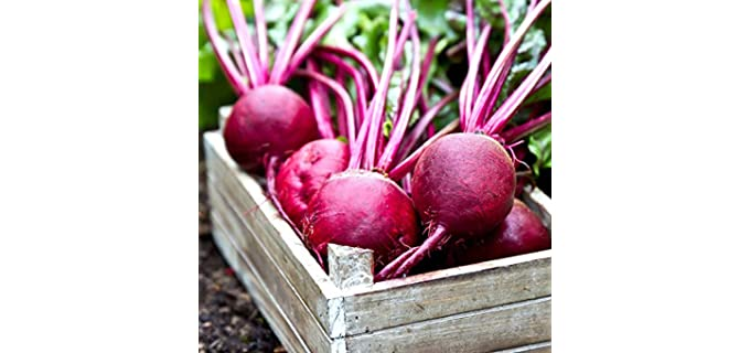 Mountain Valley Seed Heirloom - Ruby Queen Beet Seeds