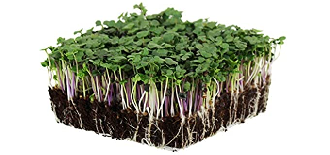 Mountain Valley Seed Salad Mix - Kale Sprouting Seeds
