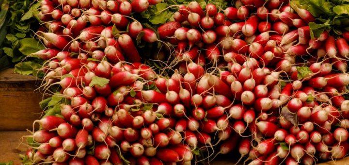 Organic Radish Sprouting Seeds